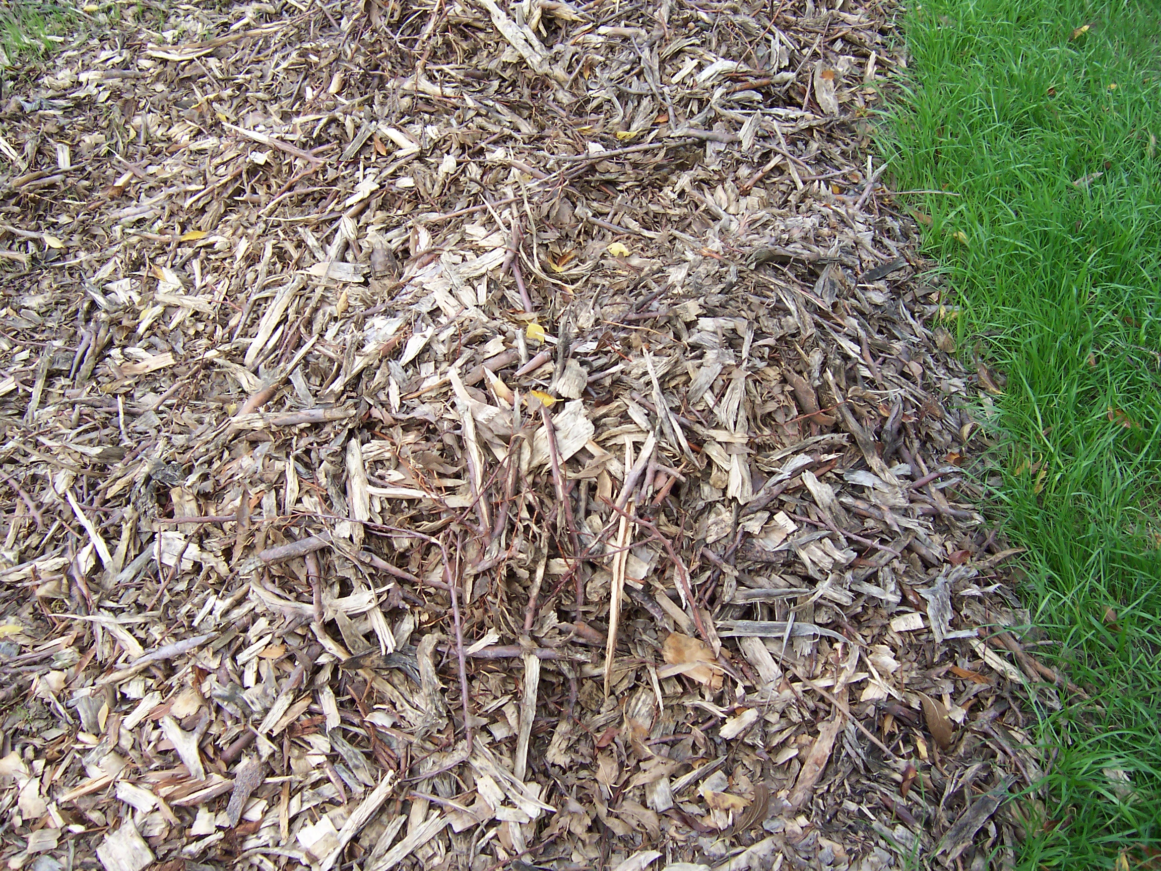 Landscaping With Wood Mulch : Wood chip mulch i grow vegetables